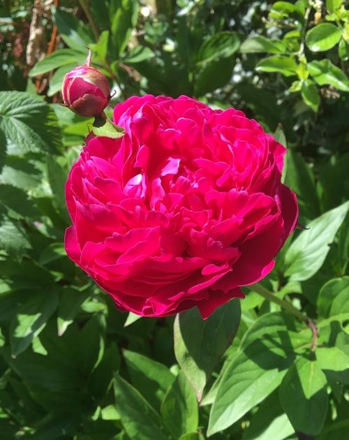 Pink Flower Web 500px